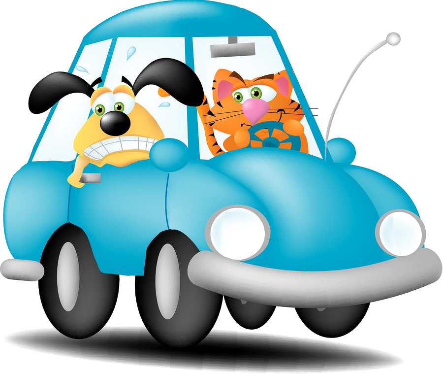 bigstock-Cat-Driving-Dog-3607780.jpg