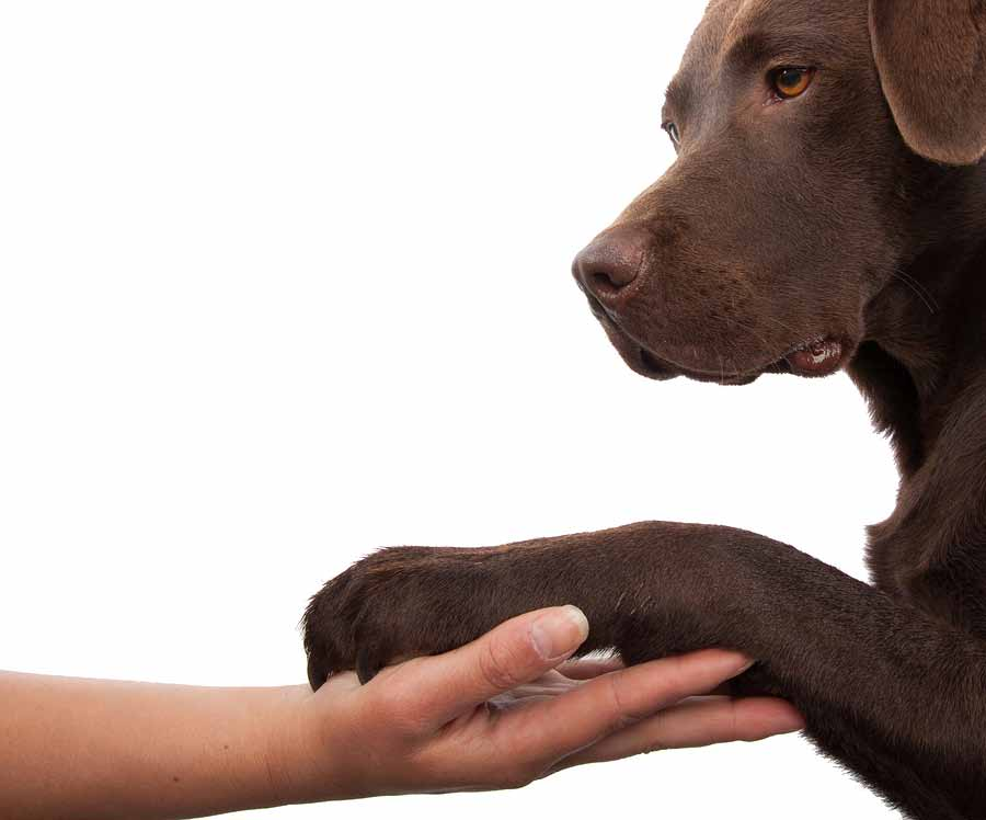 bigstock-Dog-Paw-And-Human-Hand-Doing-A-34511765.jpg