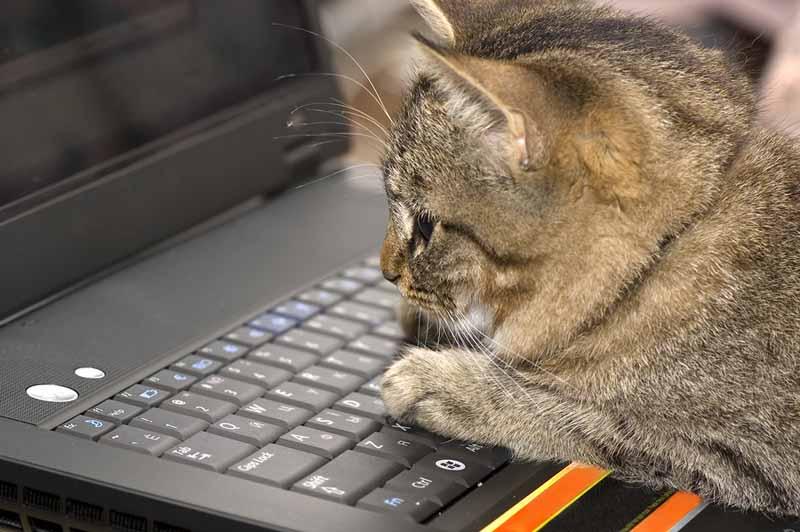 Computer Kitten.jpg