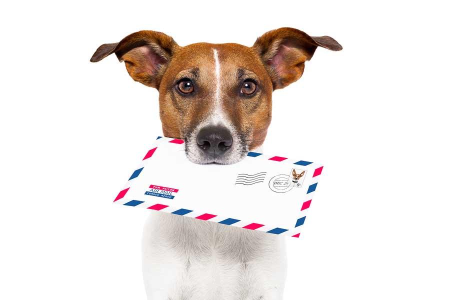 Mail dog (2).jpg
