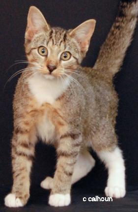 Catnip Everdeen