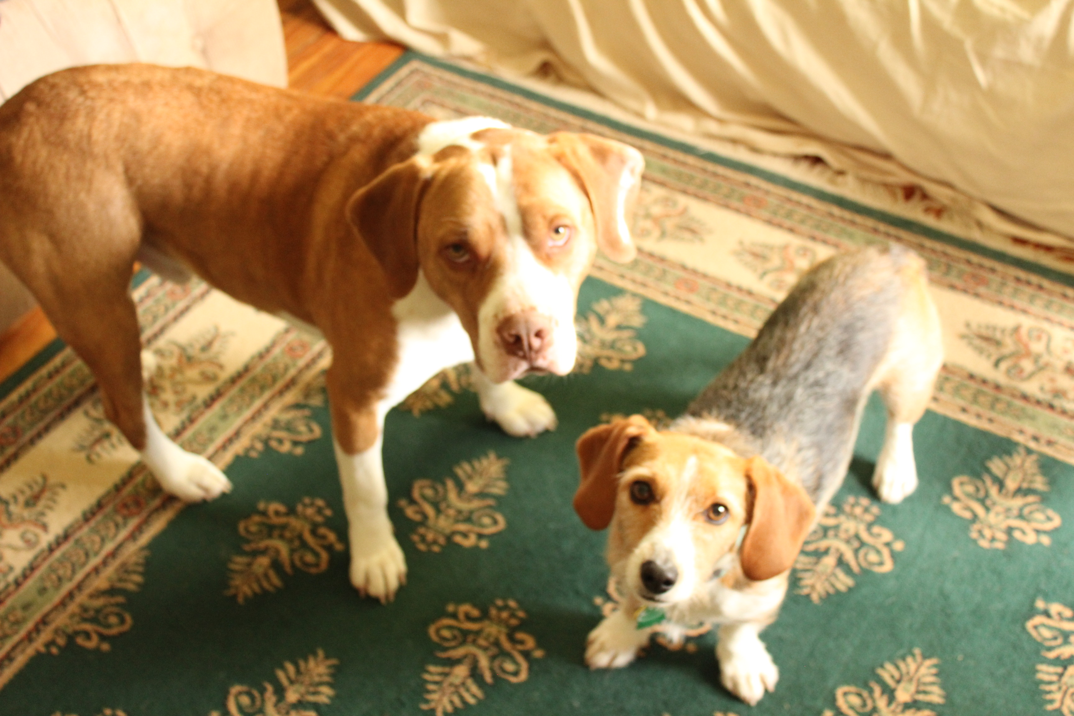 Daisy and Buster